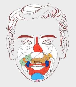 Punti del viso e mappa organi